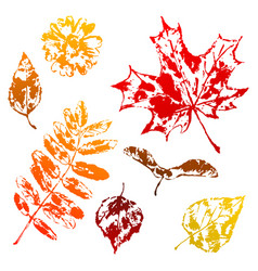 set printed leaves vector image