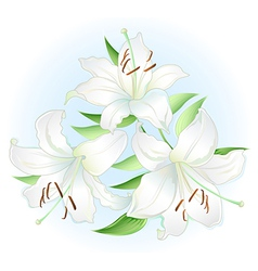 white lilly vector image vector image