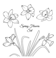Narcissus spring flowers reusable elements set vector