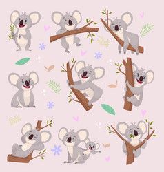 koala characters wild bear australia cartoon vector image
