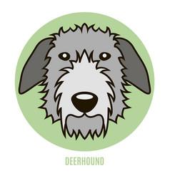 Portrait of deerhound vector