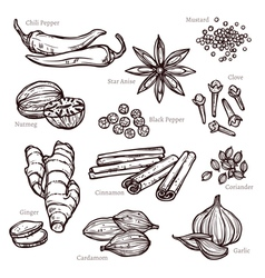 Sketch herbs and spice set vector
