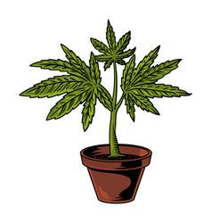 Pot cannabis drawing vector