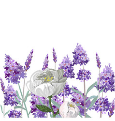 hand drawn lavender and peony template vector image vector image