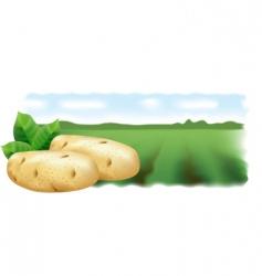 potato field landscape vector image