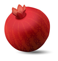pomegranate icon realistic style vector image