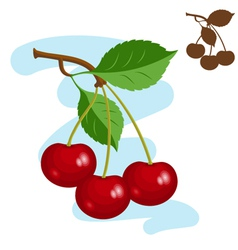 three juicy cherries vector image