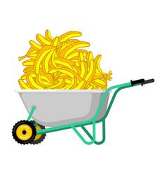 wheelbarrow and banana fruit in garden trolley vector image