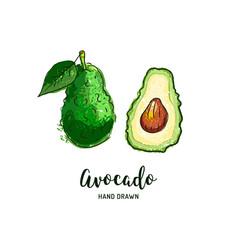 Avocado drawing hand drawn vector