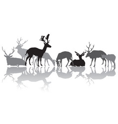 Deers silhouettes with reflection vector