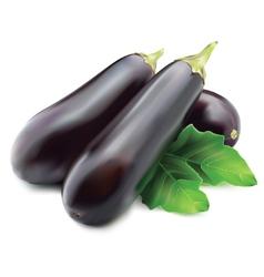 Eggplant or guinea squash vector
