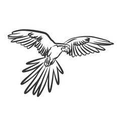 Flying parrot vector