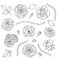 Hand drawn set of rose flowers with buds leaves vector
