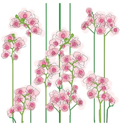 Orchids tile vector
