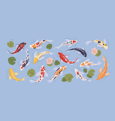 set japanese colorful koi carp fish in vector image