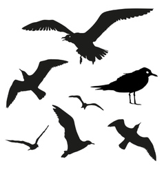 set - seagull silhouette on white vector image