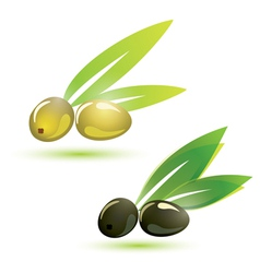 olives natural vector image vector image