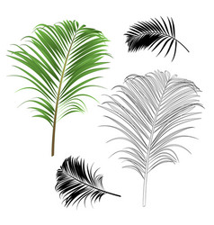 Decoration tropical house plant leaf palm vector