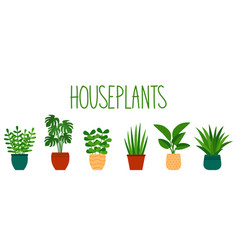 houseplants in pots in flat style and hand vector image