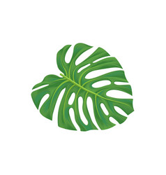 Leaf of palm tree vector