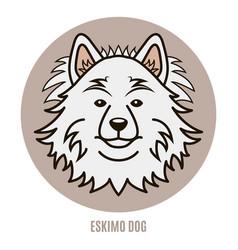 Portrait of eskimo dog vector