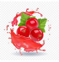 Red currant in realistic juice splash vector