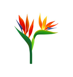 Bird paradise flowers vector