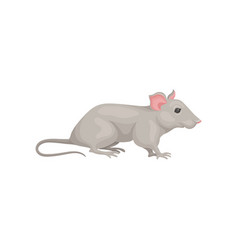 Small domestic mouse side view cute gray rodent vector