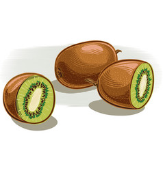 Two ripe kiwi fruit one cut in half vector