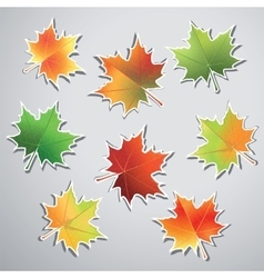 Colorful maple leaves isolated on gray background vector image