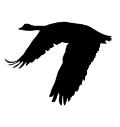 black silhouette of goose vector image vector image