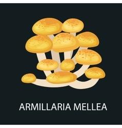 Armillaria mellea isolated Wild Foraged Mushroom vector image