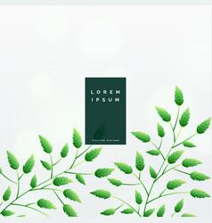 elegant green leaves background design vector image