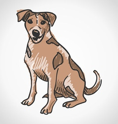 Jack Russell Terrier vector image