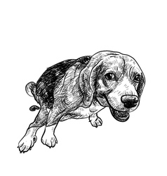 Pooping beagle vector image