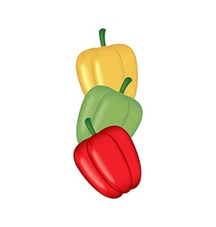 Sweet Bell Pepper vector