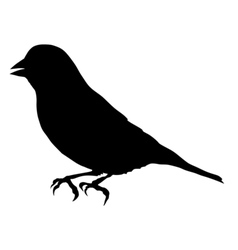 black silhouette of greenfinch vector image