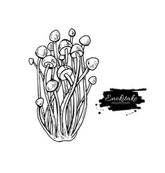 Enokitake mushroom hand drawn vector image