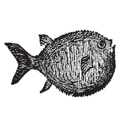 Globefish vintage vector
