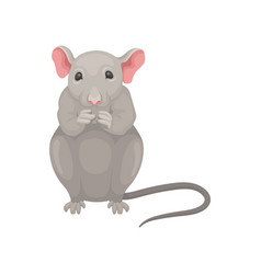 gray mouse sitting isolated on white background vector image
