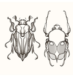 Hand drawn engraving sketch scarab beetle and vector