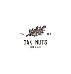 Oak nuts vintage logo vector