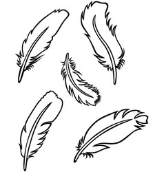 Feather set vector image