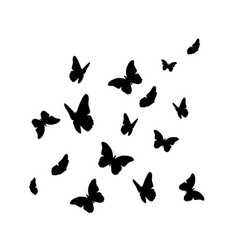 beautifil butterfly silhouette isolated on white vector image vector image