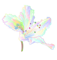 Colorful rhododendron light flower mountain vector