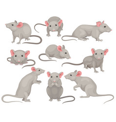 flat set of mouse in different poses small vector image