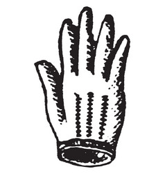 glove a cover for hand vintage engraving vector image