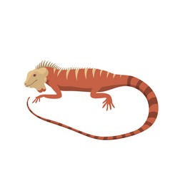 iguana lizard reptile isolated vector image