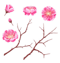 set of sakura buds or cherry blossom and branches vector image
