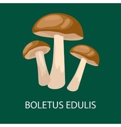 boletus edulis isolated Wild Foraged Mushroom vector image